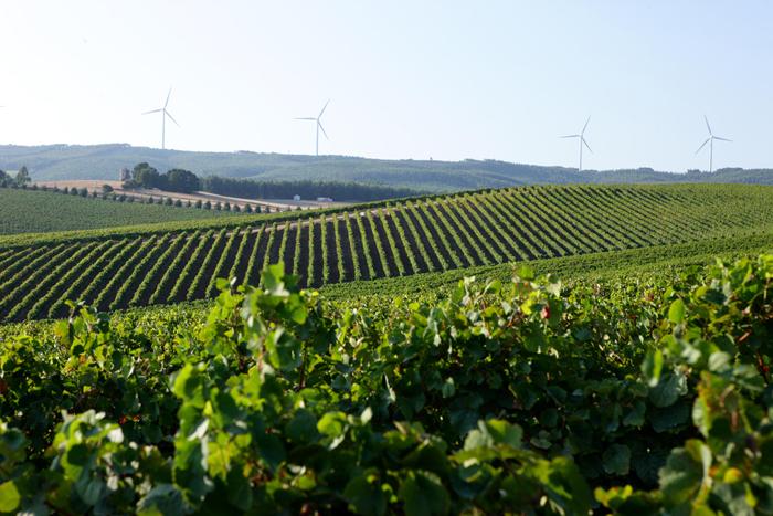 五款葡萄牙進口紅酒來到朝陽!小編帶你揭開這五款新酒的神秘面紗